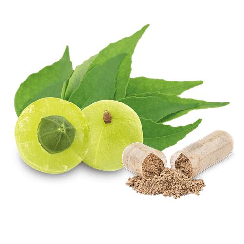 bio-amlabeere-curryblatt-eisen-plus-c-kapsel