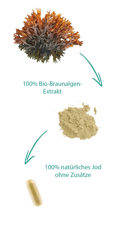 bio-jod-braunalge-kapseln-mobil