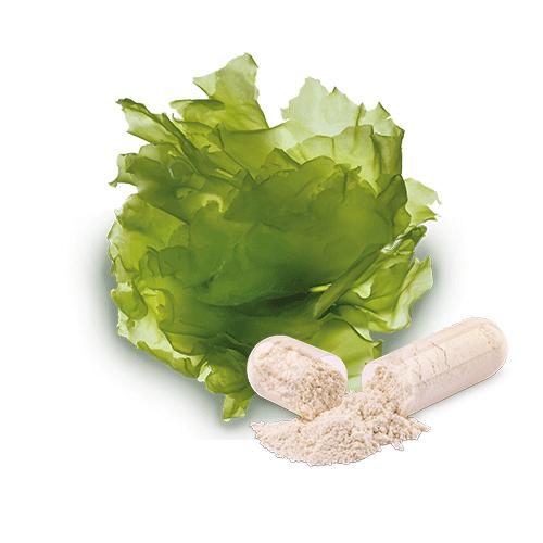 bio-meerlattich-magnesium-kapseln
