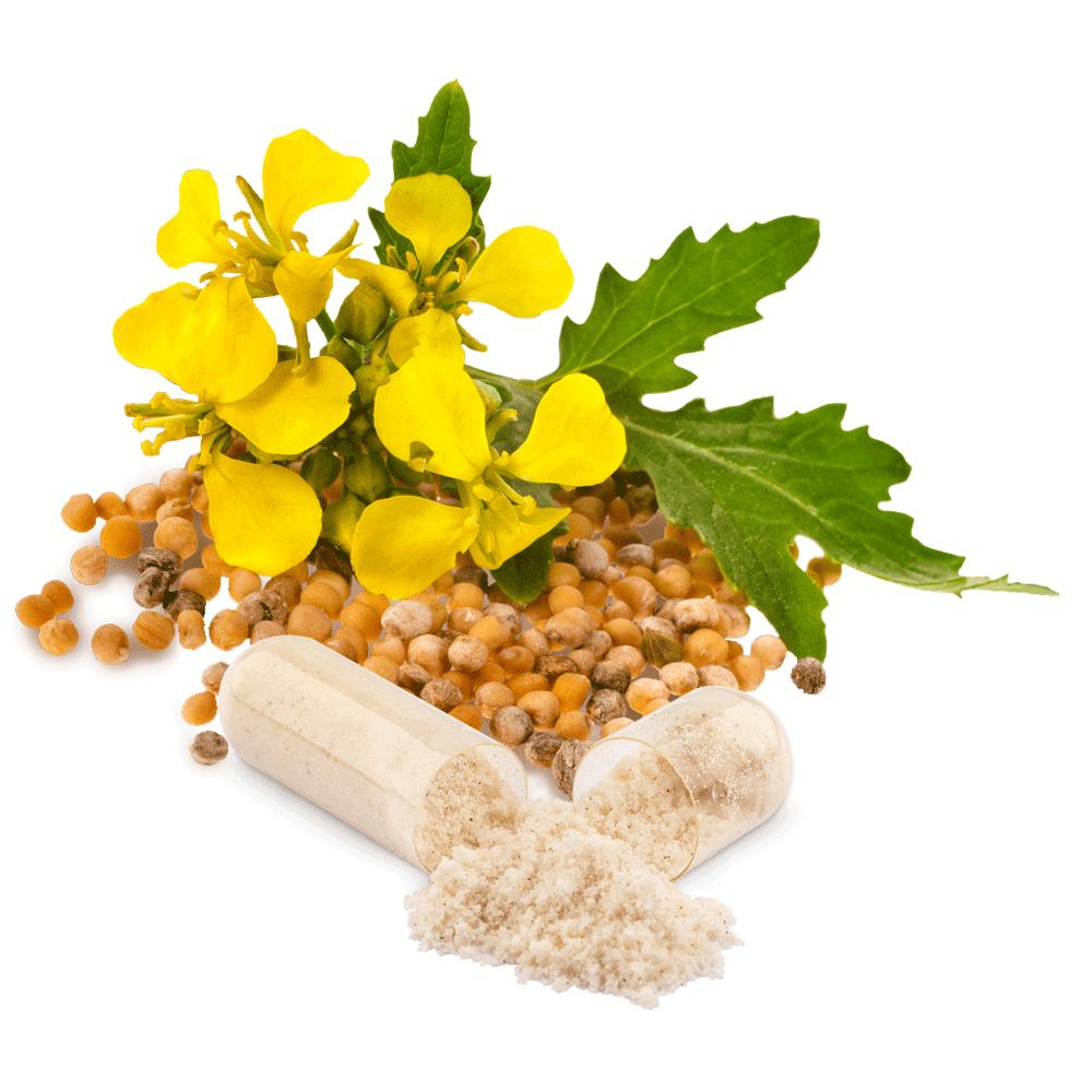 bio-selen-senfkoerner