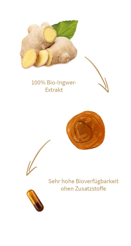 ingwer-kapseln-gingerin-mobil