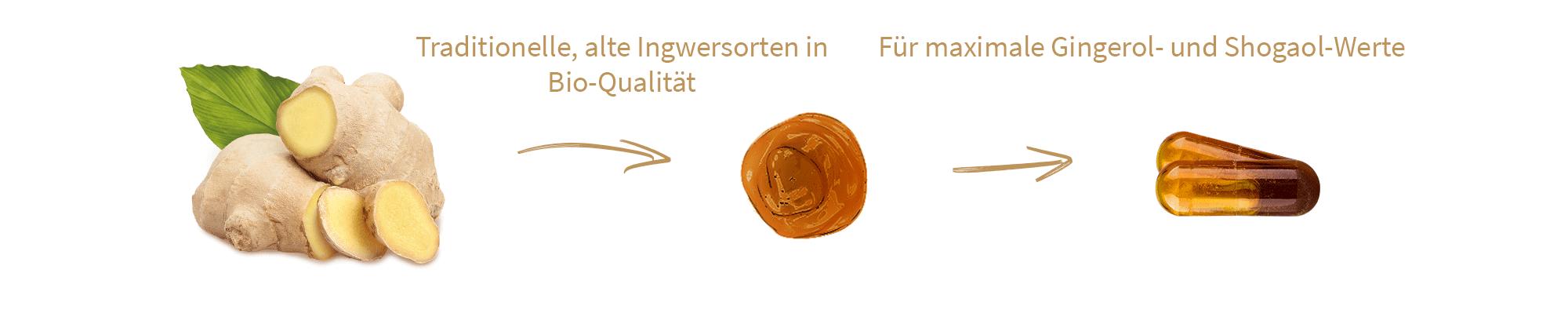 ingwer-kapseln-liquid