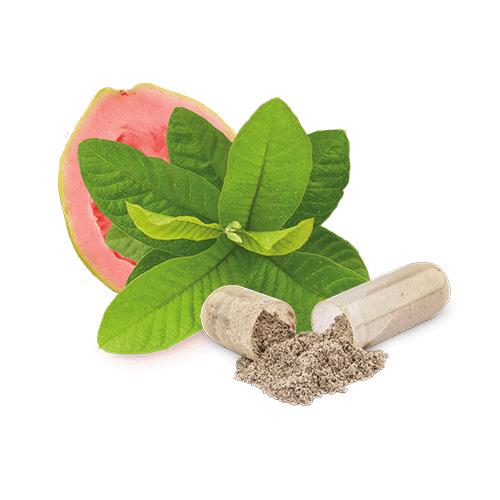 zink-guavenblatt-bio-kapsel-rohstoff