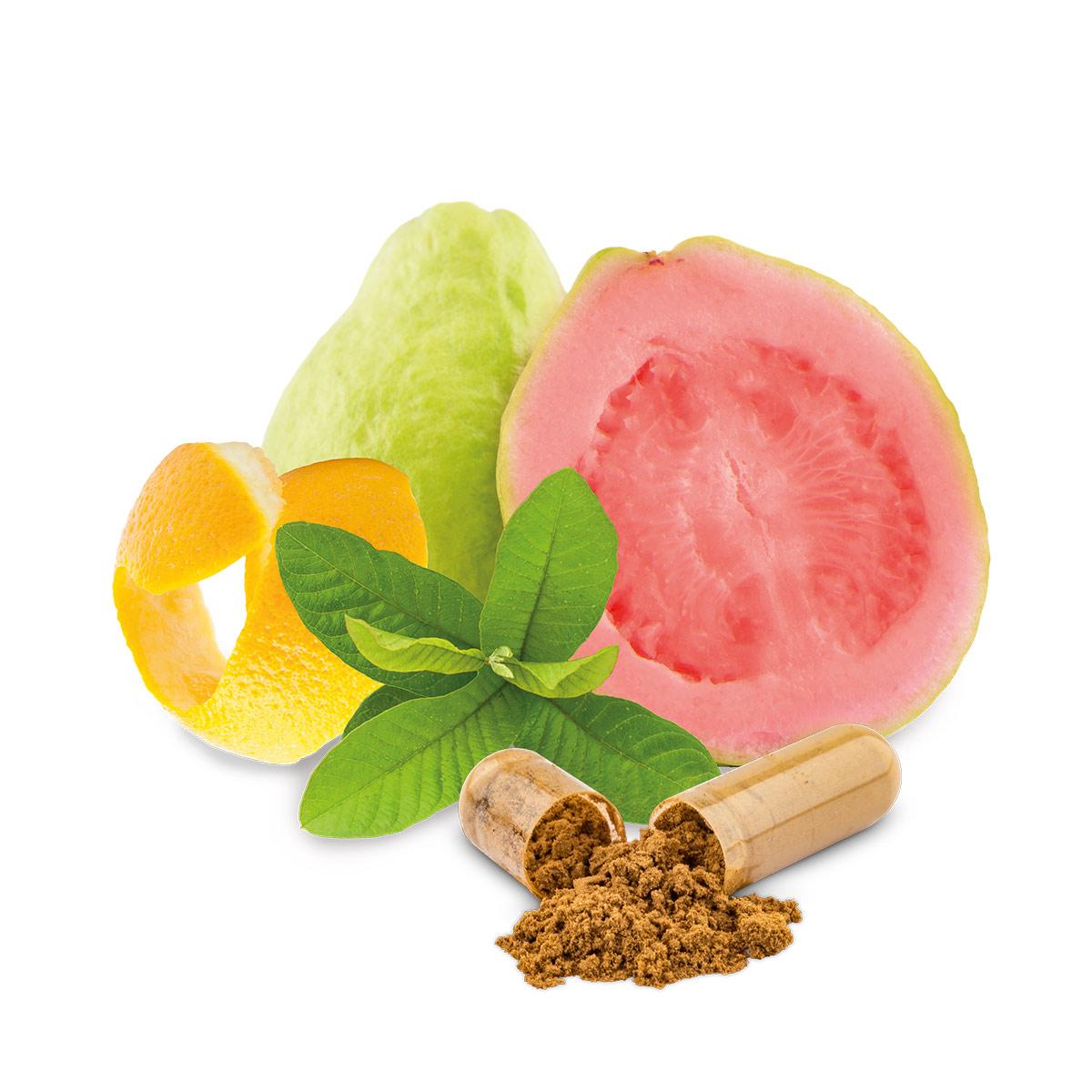 vitamin-b-kapseln-bio-rein-pflanzlich-phytholistic-90-stueck-guave-zitronenschale-basilikum-kapsel-1200x1200