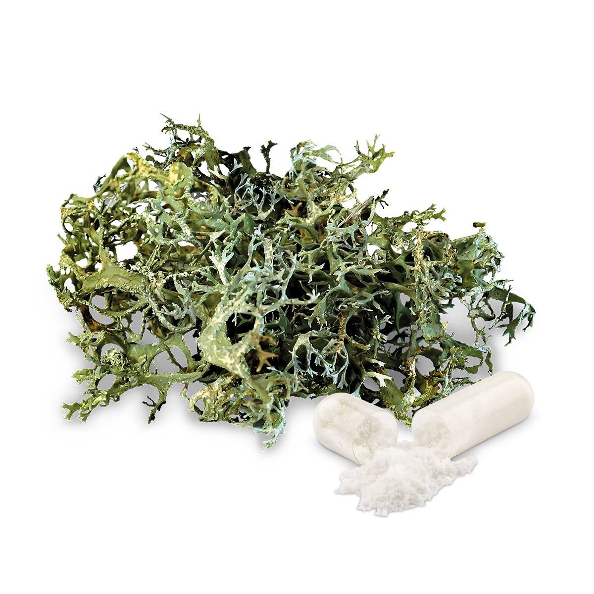 vitamin-d3-kapseln-vegan-phytholistic-180-stueck-flechte-kapsel-1200x1200